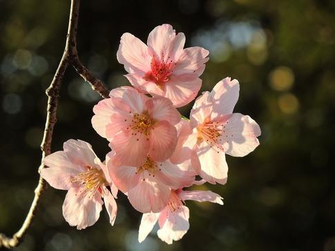 2019-03-23  A-Resized  北本メディカルセンター付近の陽光‥ (3).jpg