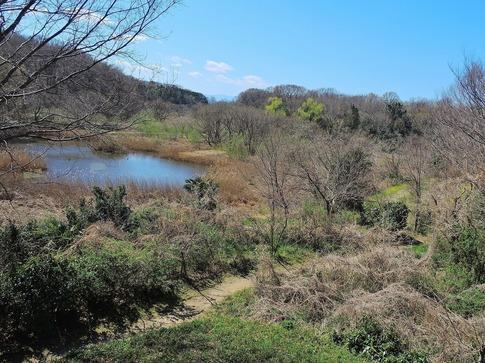 2019-03-24  Resized  北本自然観察センター‥ (5).jpg