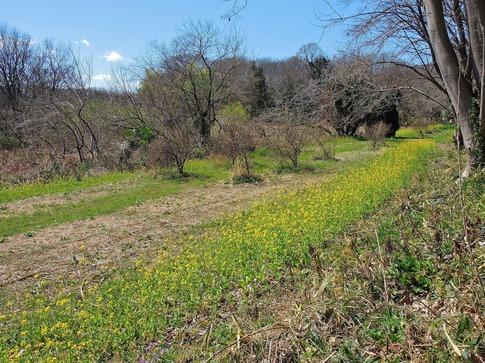 2019-03-24  Resized  北本自然観察センター‥ (6).jpg