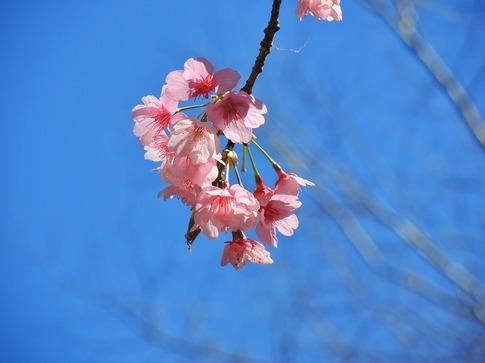 2019-03-24  Resized  石戸宿の春‥ (10).jpg