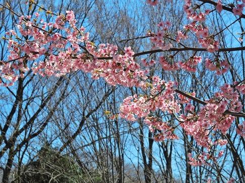 2019-03-24  Resized  石戸宿の春‥ (9).jpg