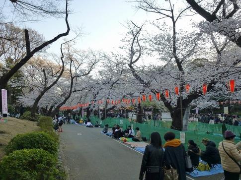 2019-04-04  Resized  上野公園‥ (10).jpg