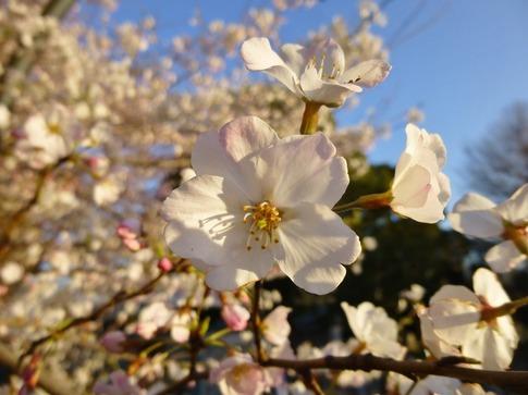 2019-04-04  Resized  上野公園‥ (1).jpg