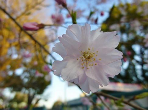 2019-04-04  Resized  上野公園‥ (6).jpg