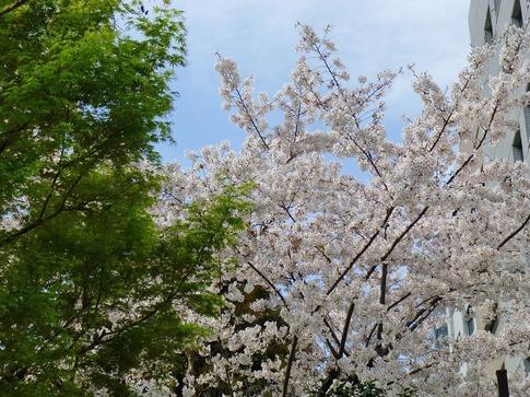 2019-04-05  Resized  飯田橋外堀‥ (10).jpg