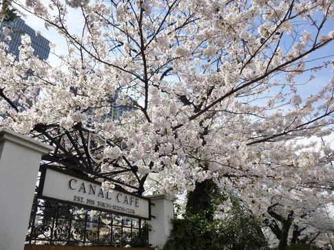 2019-04-05  Resized  飯田橋外堀‥ (12).jpg