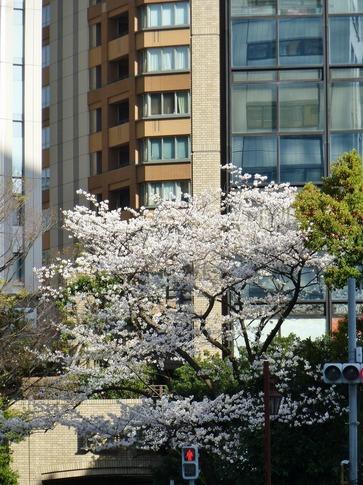 2019-04-05  Resized  飯田橋外堀‥ (1).jpg