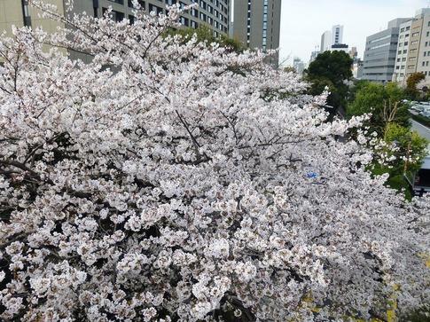 2019-04-05  Resized  飯田橋外堀‥ (5).jpg