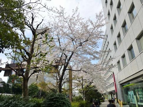 2019-04-05  Resized  飯田橋外堀‥ (8).jpg
