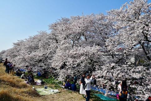 2019-04-06  B-Resized  熊谷市(桜堤)‥ (15).jpg