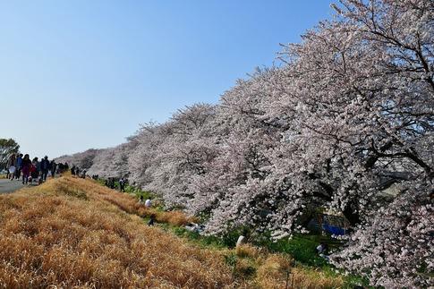 2019-04-06  B-Resized  熊谷市(桜堤)‥ (18).jpg