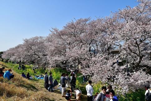 2019-04-06  B-Resized  熊谷市(桜堤)‥ (7).jpg