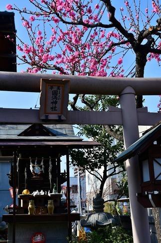 2019-04-06  Resized  熊谷市桜巡り‥ (1).jpg