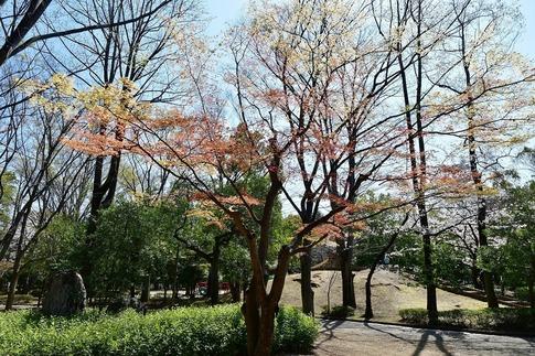 2019-04-06  Resized  熊谷市桜巡り(中央公園)‥ (12).jpg