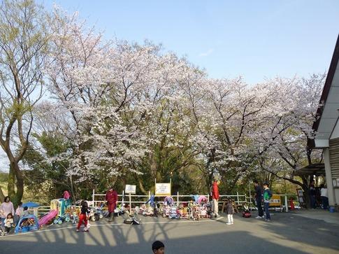 2019-04-07  Resized  上尾榎本牧場‥ (2).jpg