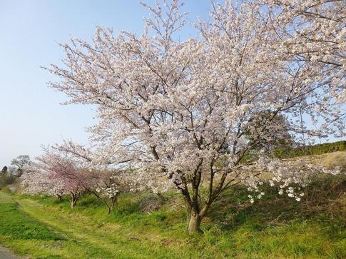 2019-04-07  Resized  上尾榎本牧場‥ (4).jpg