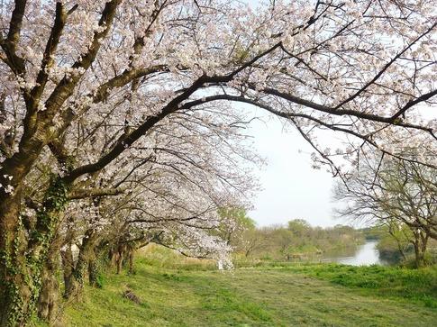 2019-04-07  Resized  上尾榎本牧場‥ (6).jpg
