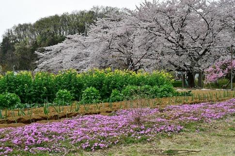 2019-04-07  Resized  吉見町‥ (3).jpg