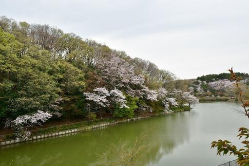 2019-04-07  Resized  吉見町‥ (5).jpg