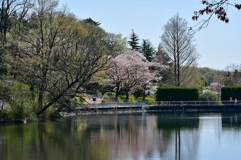 2019-04-13  A-Resized  武蔵丘陵森林公園‥ (10).jpg