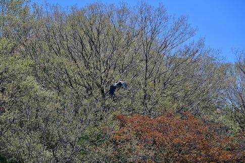 2019-04-13  A-Resized  武蔵丘陵森林公園‥ (8).jpg