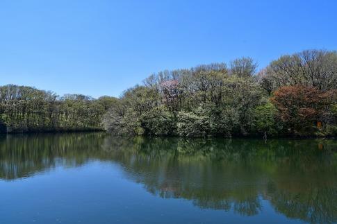 2019-04-13  A-Resized  武蔵丘陵森林公園‥ (9).jpg