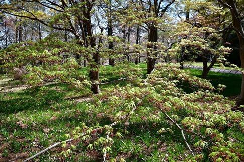 2019-04-13  B-Resized  武蔵丘陵森林公園‥ (8).jpg