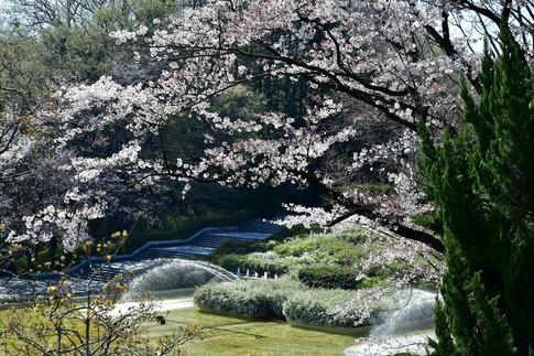 2019-04-13  C-Resized  武蔵丘陵森林公園‥ (10).jpg