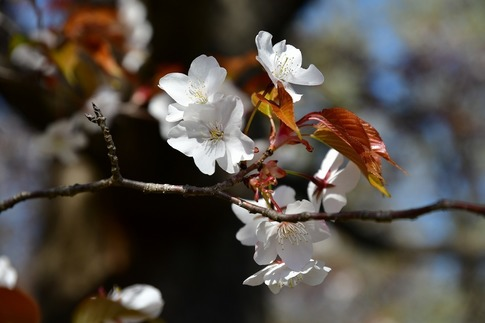 2019-04-13  Resized  武蔵丘陵森林公園‥ (3).jpg