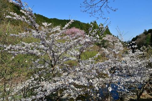 2019-04-20  A-Resized  古峯園(鹿沼市草久)‥ (13).jpg