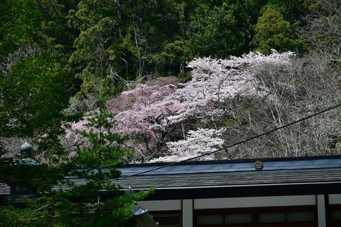 2019-04-20  A-Resized  古峰神社(鹿沼市草久)‥ (2).jpg