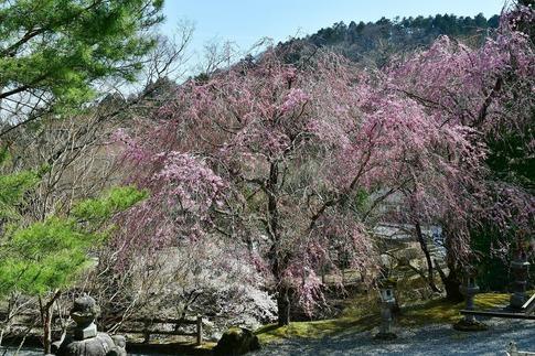 2019-04-20  A-Resized  古峰神社(鹿沼市草久)‥ (4).jpg