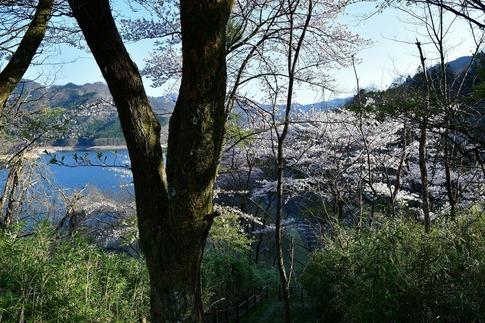 2019-04-20  A-Resized  草木湖(群馬県みどり市)‥ (1).jpg