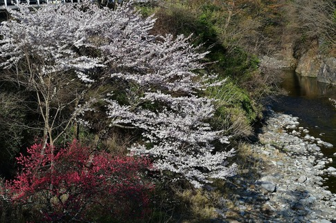 2019-04-20  A-Resized  草木湖(群馬県みどり市)‥ (3).jpg