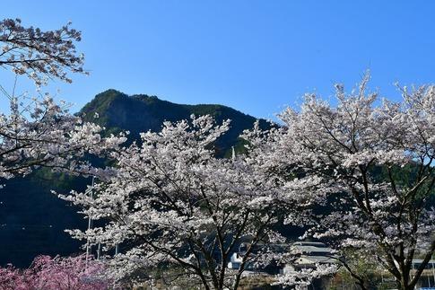 2019-04-20  A-Resized  草木湖(群馬県みどり市)‥ (7).jpg
