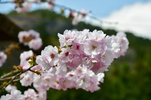 2019-04-20  Resized  鹿沼市草久(瑞峯寺)‥ (15).jpg