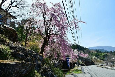 2019-04-20  Resized  鹿沼市草久(瑞峯寺)‥ (4).jpg