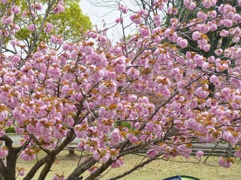 2019-04-21  Resized  平成の森公園‥ (10).jpg