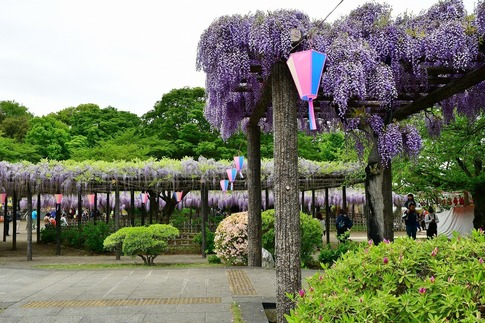 2019-04-27  A-Resized  玉敷神社‥ (2).jpg