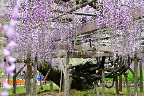 2019-04-27  A-Resized  玉敷神社‥ (4).jpg