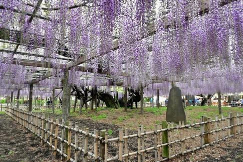 2019-04-27  A-Resized  玉敷神社‥ (5).jpg
