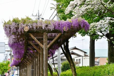 2019-04-27  Resized  加須市玉敷‥ (2).jpg