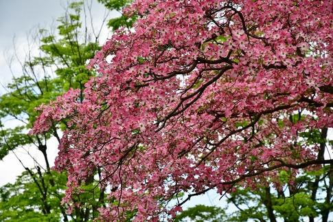 2019-04-27  Resized  平塚公園‥ (3).jpg