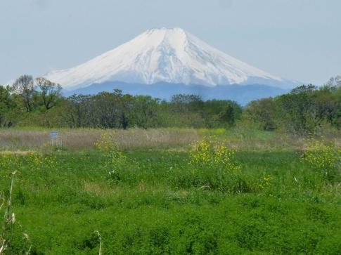 2019-04-28  Resized  富士山(桶詰橋)‥ .jpg