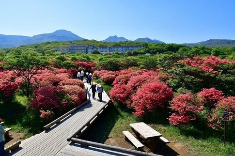 2019-05-25  A-Resized  那須八幡つつじ園地‥ (13).jpg
