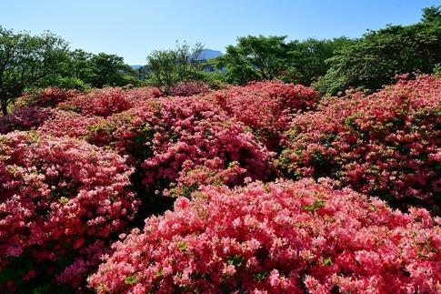 2019-05-25  A-Resized  那須八幡つつじ園地‥ (8).jpg