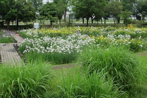 2019-06-09  Resized  平成の森公園‥ (1).jpg