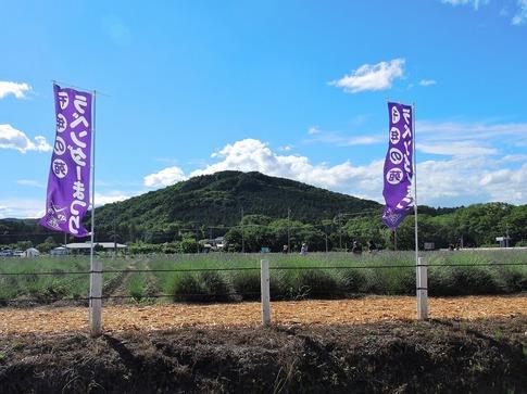 2019-06-16  Resized  ラベンダー千年の苑(嵐山町)‥ (14).jpg