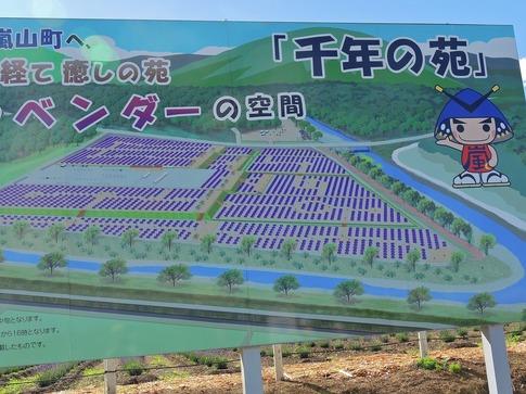 2019-06-16  Resized  ラベンダー千年の苑(嵐山町)‥ (15).jpg