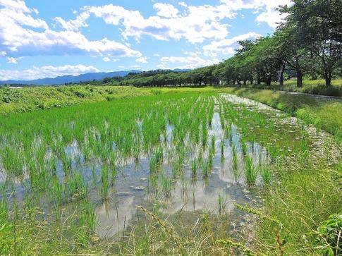 2019-06-16  Resized  ラベンダー千年の苑(嵐山町)‥ (2).jpg